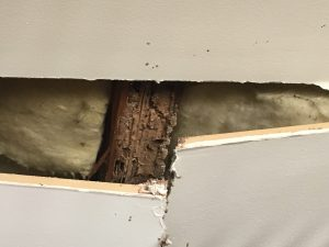 pest damage perth